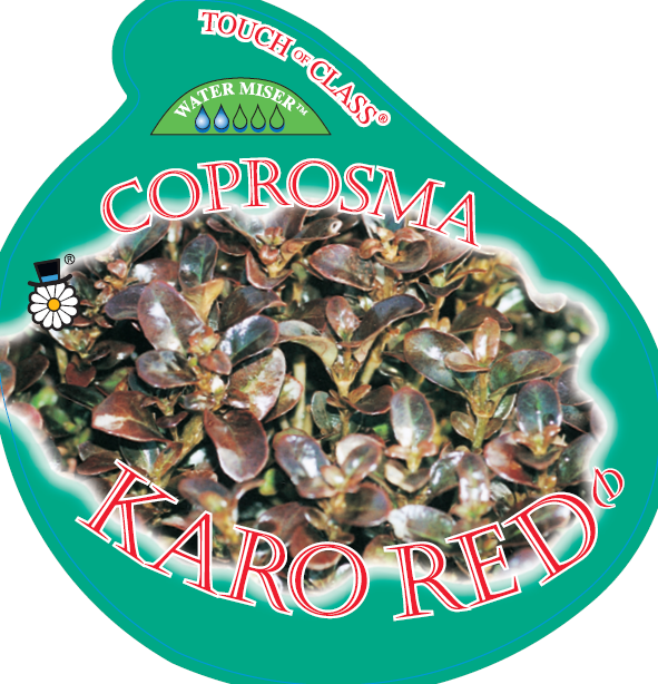 Coprosma_0020_karo_0020_red