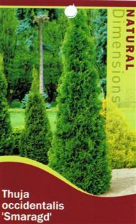 thuja occidentalis smaragd 175mm pot dawsons garden world. Black Bedroom Furniture Sets. Home Design Ideas