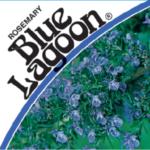 Rosemary Blue Lagoon