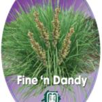 lomandra-fine-n-dandy
